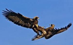 eagle Romance