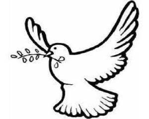 white dove 3
