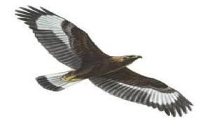 Eagle Odyssey- full flight spread