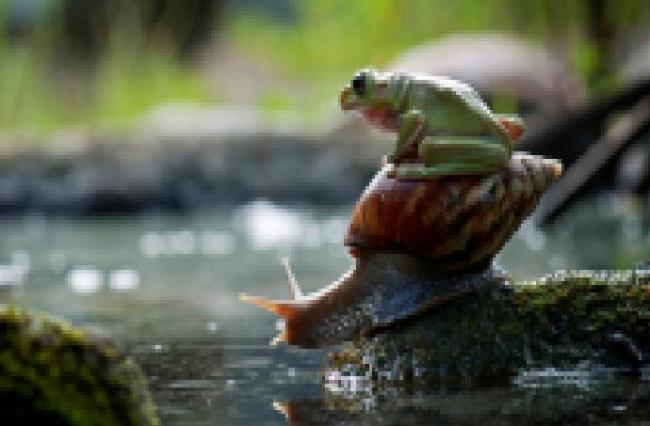 snailway ride
