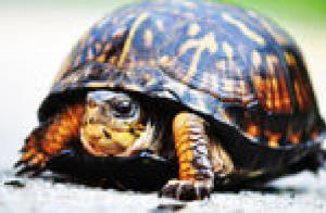 donation turtle