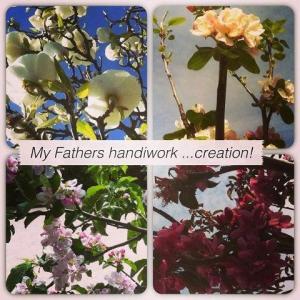God's creation flowers
