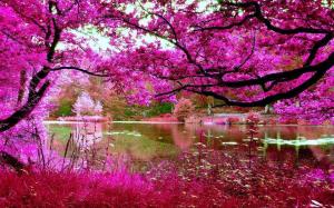 spring chrry blossom2