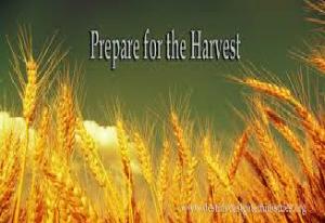harvest6