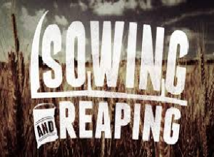 sowing5