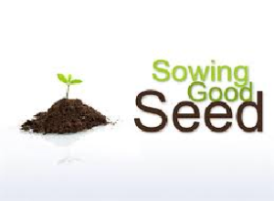 sowing6