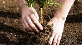 planting-copy-2